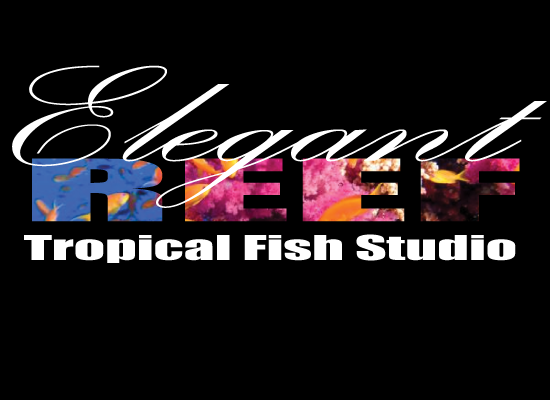 Elegant reef san antonio 39 s newest tropical fish store for Fish store san antonio