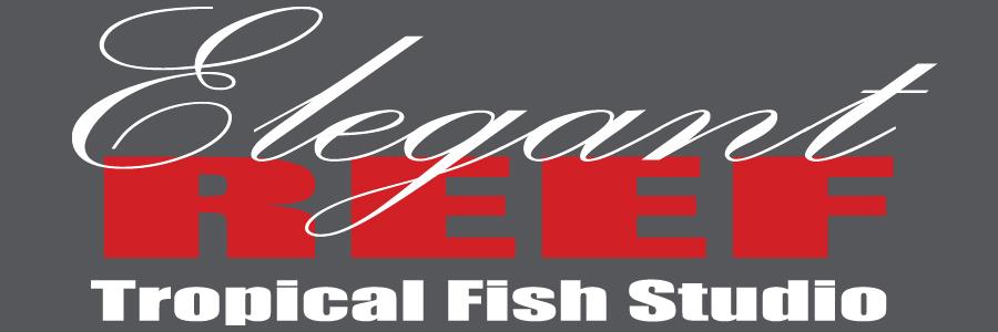 Elegant Reef – Tropical Fish Studio
